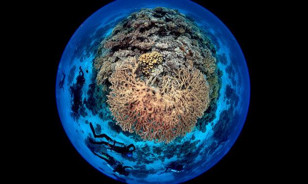 Blancpain, socio de Naciones Unidas por el Día Mundial de los Océanos 2021.